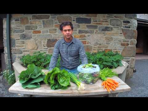 Stone Barns 2017 CSA: Week 2 with Jack Algiere