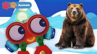 Kids Learn Animals with Robi | Educational Early Learning Videos with Polar Bear, Lion & Birds