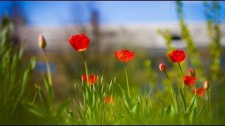 И Все о Той Весне