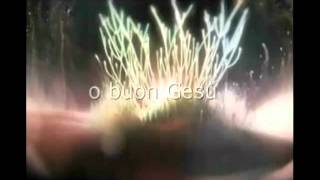 ANIMA DI CRISTO.mp4