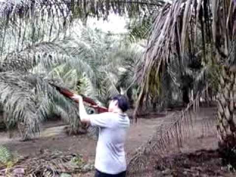sniper burung tekukur.err;;;;;;;;;;.