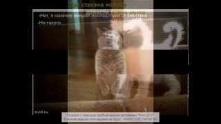 Приколы кошек