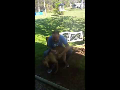 Dog doesn't recognize owner until he sniffs him