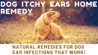 dog itchy ears home remedy | Natural Remedies For Dog Ear Infections THAT WORK!