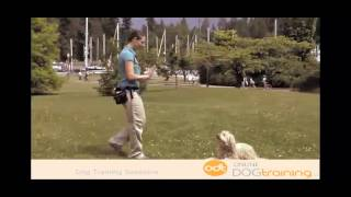 How To Stop Dogs Barking