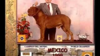 Campeón Mundial Axcel Du Mont Rouge Dogue De Bordeaux Dogo De Burdeos