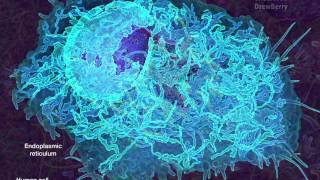 Cell Organelles 7 Endoplasmic Reticulum