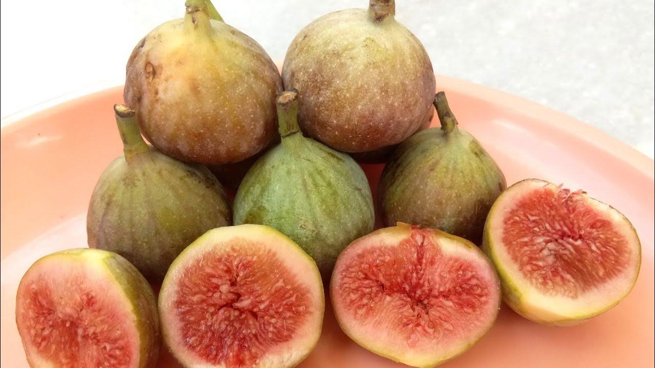 అంజీర్#మేడిపండు#అత్తి పండు#Anjeer Fruits ...