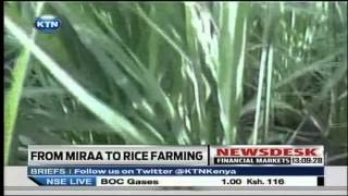 Miraa farming abandoned for Rice in Tigania