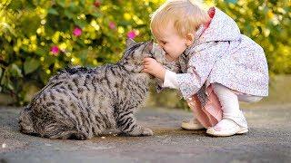 Смешные Видео Приколы с Котами Смешные Коты до Слез Смешные Животные 2019 14