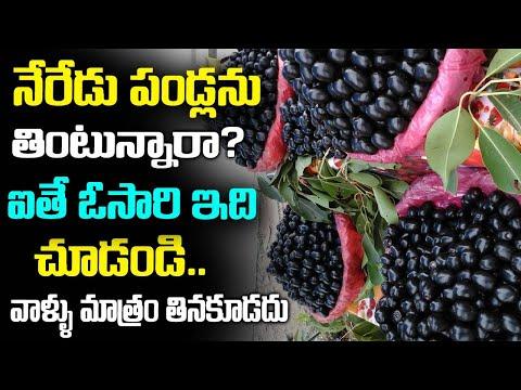 Neredu Pandu Health benefits | Real Facts of jamun fruit benefits in pregnancy I Black Plum effects
