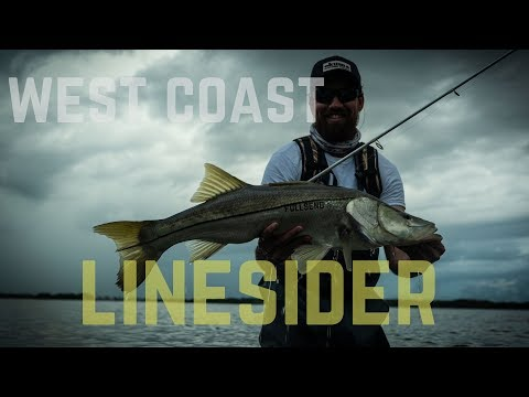Flats Fishing Tampa Bay | Dock Reds And Snook