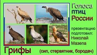 Грифы. Голоса птиц России