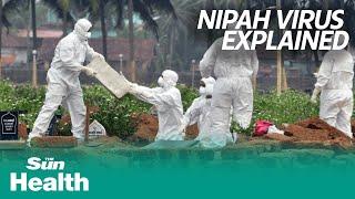 "Nipah virus, the ""next pandemic threat"" explained screenshot 3"