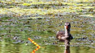 МНОГО КАРАСЯ на ПЕРО в МИКРОРЕЧКЕ рыбалка на поплавок летом в жару