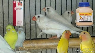 Vitamins and Multivitamin for All Kinds Bird Information in ( Urdu / Hindi )