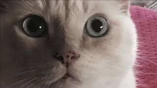 White Kitten makes funny face cute kitty cat Now and Then