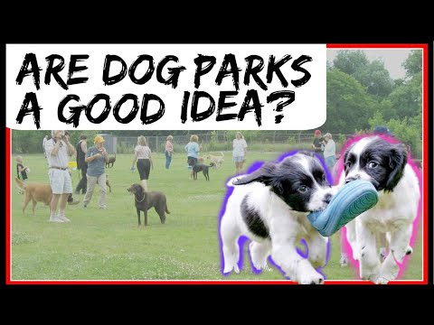 Is The Dog Park A Good Idea? Bringing My Dog To The Dog Park
