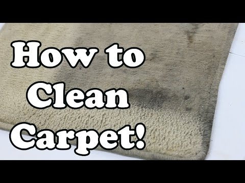How To Clean Carpet Chemical Guys Products Nonsense