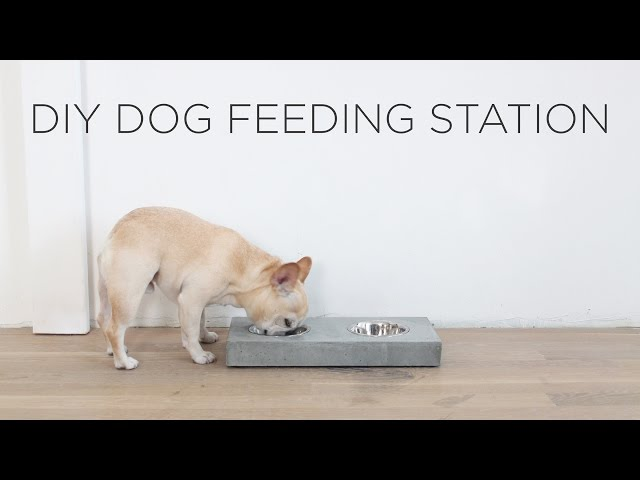 DIY Concrete Dog Feeding Station