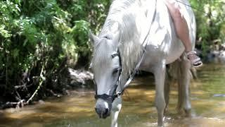 История терской породы лошадей
