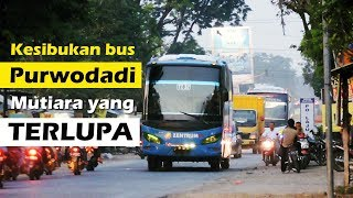 Kesibukan Bus Purwodadi...  | Sore Hari Di Karangawen, Kab. Demak, Jawa Tengah