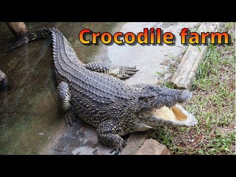 Cayo Coco, Crocodile farm,Cuba travel video,