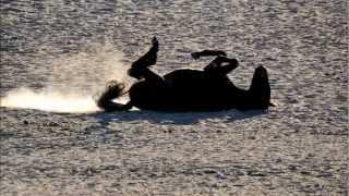 Konie i zebry 2012