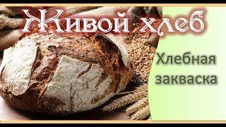 Живой Хлеб. Хлебная закваска. Ольга Дзюбан