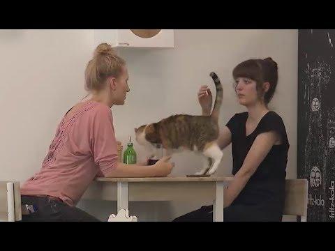 Erstes Katzencafé in