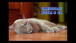 Приколы с кошками и котами #24. Подборка смешных и интересных видео с котиками и кошечками 2017