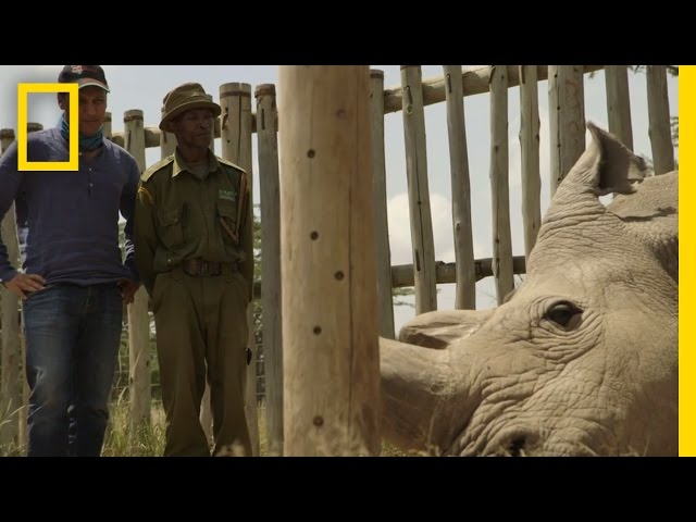 The Last Northern White Rhinos | Years of Living Dangerously