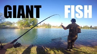 Have you ever done Feeder Fishing? Giant Carp, Amur, Catfish and a TURTLE!