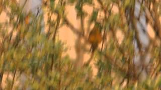 Yellowhammer Dialects