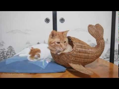 Funny Cats Compilation | January 2014