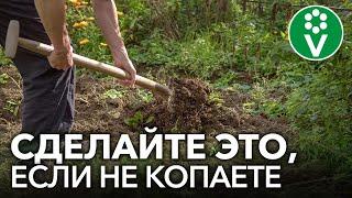 ОГОРОД БЕЗ ПЕРЕКОПКИ: обязательно сделайте это, если не копаете грядки осенью