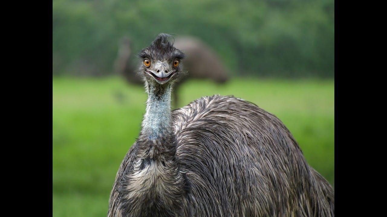 World's Weirdest Bird Sounds - Part Two