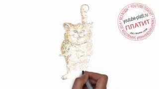 Нарисованные коты и кошки  Как нарисовать поэтапно кота из мультика