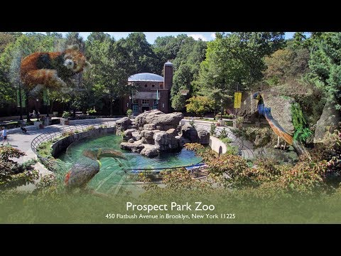 A Day at the Prospect Park Zoo - New York City