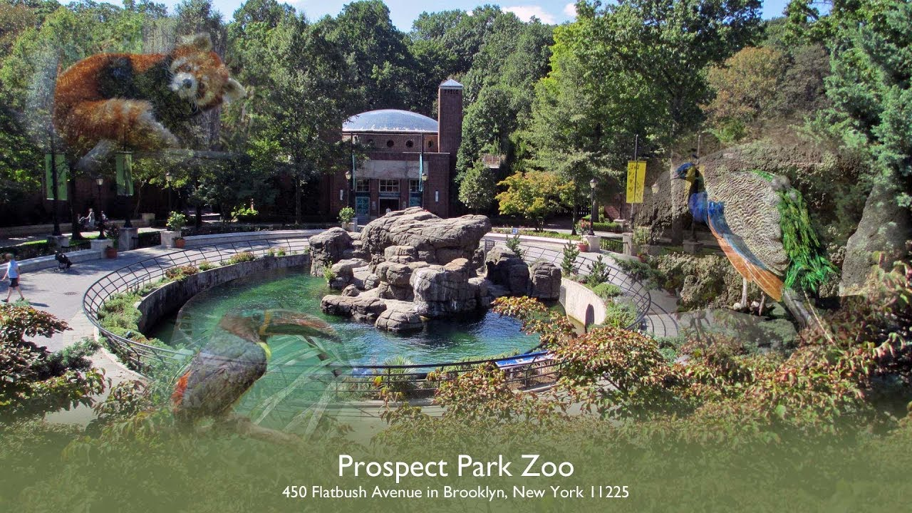 a day at the prospect park zoo new york city youtube. Black Bedroom Furniture Sets. Home Design Ideas