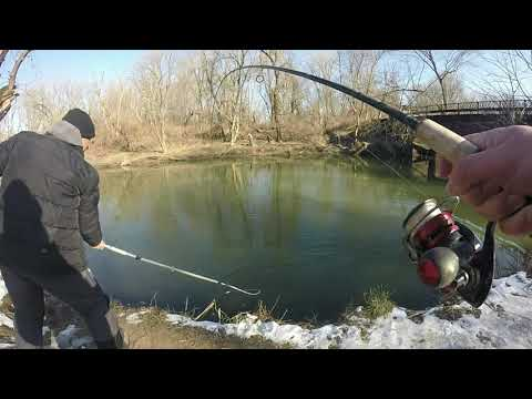 Insane Shore Fishing Action For Spring COHO SALMON-- Lake Michigan 2020