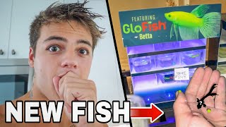 My *NEW* BETTA GLO-FISH!! (Limited)