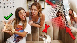 OuR RAT PUP DIED...**NEW PET SURPRISE**