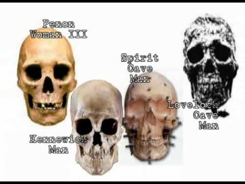 3 Basic Human Skulls