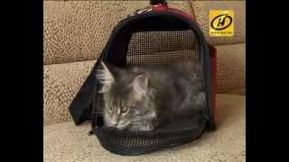 Домик для кота - выбор сумки-переноски, советы