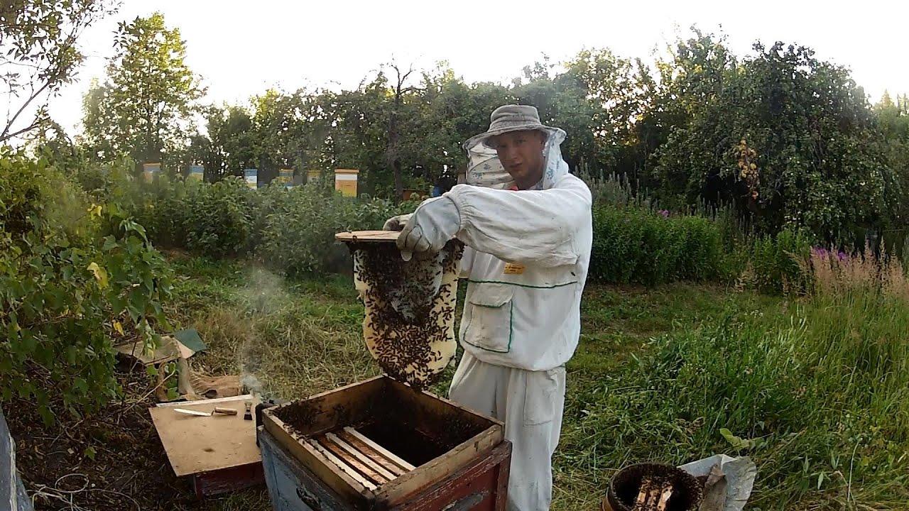 чем видеофильм про пчеловодство означает