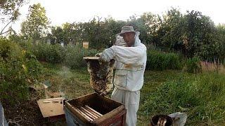 Ловля роев. Мои рабочие ловушки. 2014 год(Рациональному пчеловодству учился у Осташова Н.Н. Сейчас с удовольствием слежу за поступлением видеоматер..., 2014-12-12T15:07:23.000Z)