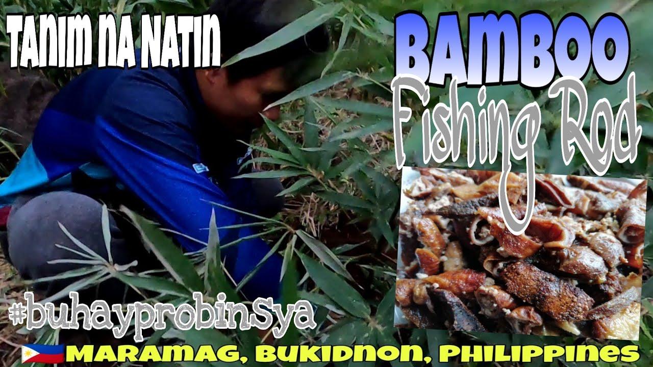 Bamboo Fishing Rod , Tanim na natin   Fried Elugon   BUHAY PROBINSYA EP-60   BUKIDNON