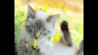 Beautiful photos kittens 2! Красивые фото котят 2!
