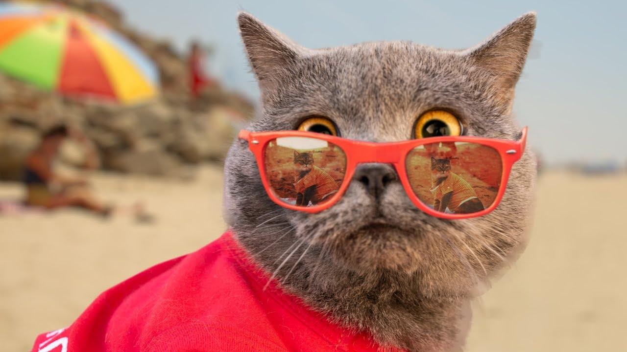 World's First Cat Lifeguard - YouTube